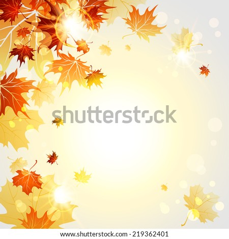fall maple leaves on sunny