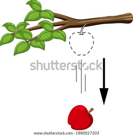 Falling apple for gravity experiment illustration Сток-фото ©
