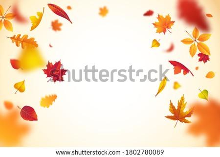 falling colorful autumn leaves