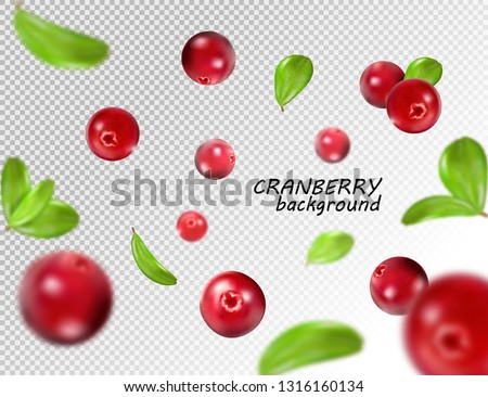 falling cranberry isolated on