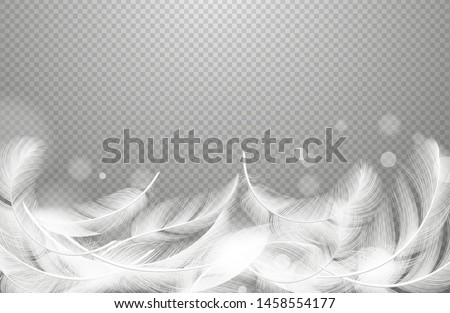 Falling feathers vector. Realistic floating white feathers isolated on transparent background. Soft feather and smooth light softness plumage illustration