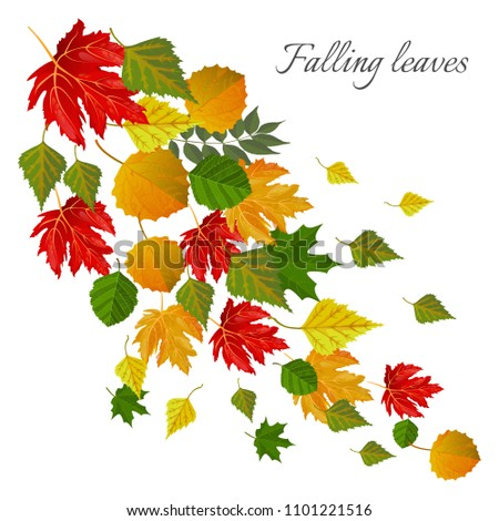 falling leaves autumn seasonal