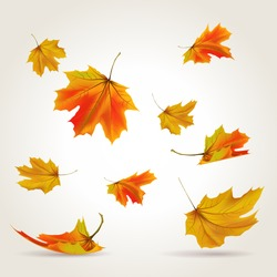 Falling leaves set, vector illustration