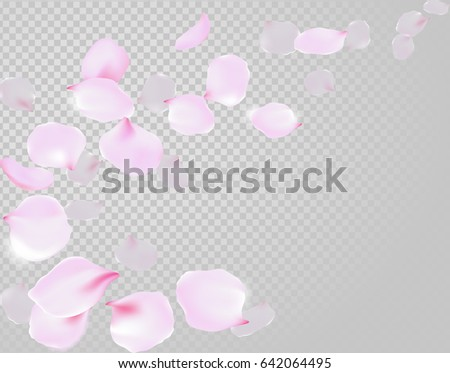 Falling rose petals soft delicate pink blossom on transparent background. Sakura cherry flying flowers. 3d realistic design. Vector illustration art