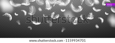 Falling twirled realistic feathers isolated on a transparent background. Easy style, can be used in flyers, banners, web. Light cute feathers design. Elements for design. Vector illustration.