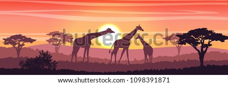 Family of giraffes in the African savanna at sunset. Silhouettes of animals and plants. Realistic vector landscape. The nature of Africa. Reserves and national parks.