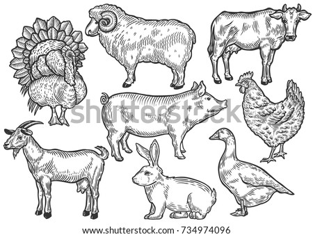 Farm animal set. Fresh organic meat. Cow, goat, rabbit, pig, turkey, hen, sheep, goose, duck. Hand drawn sketch. Vintage vector engraving illustration for poster, web. Isolated on white background