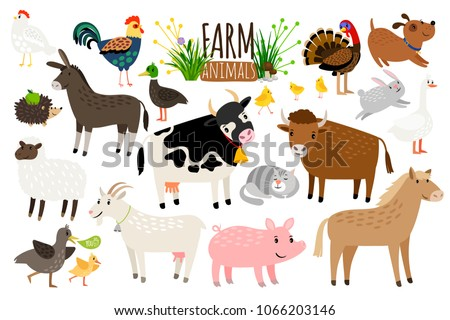 Farm animals. Domestic farm animal collection isolated on white background, goose and donkey, pig and goat, cow and sheep vector illustration