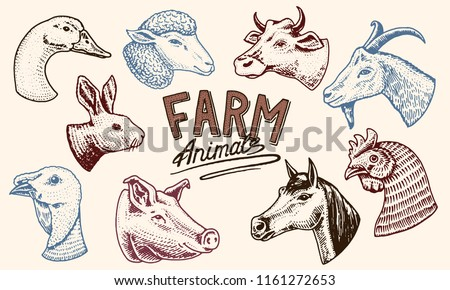 Farm animals. Head of a domestic horse pig goat cow alpaca llama rabbit sheep. Logos or emblems for signboard. Set of icons for the menu. engraved hand drawn in old sketch vintage style.