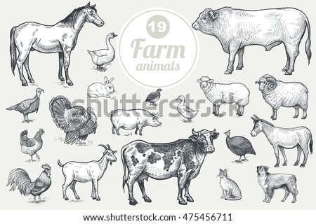 farm animals. isolated on white ...