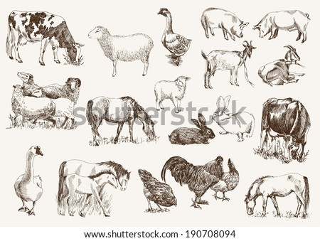 farm animals. set of vector sketches on a white background