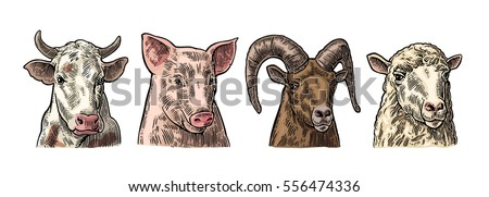 farm animals set pig  cow