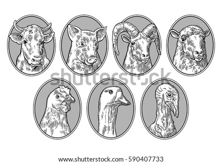 Farm animals set. Pig, cow, sheep, chicken, goose , turkey and goat heads isolated on brown background. Vector monochrome vintage engraving illustration for menu, web and label.