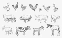 Farm Animals set. Vector sketches hand drawn illustration background. Flyer, booklet advertising and design. Line art style.