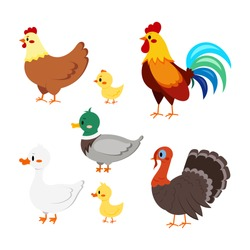 Farm birds set isolated on white background. Cute cartoon domestic bird character - turkey, duck, goose, gosling, hen, chicken, rooster. Vector flat design poultry collection illustration.