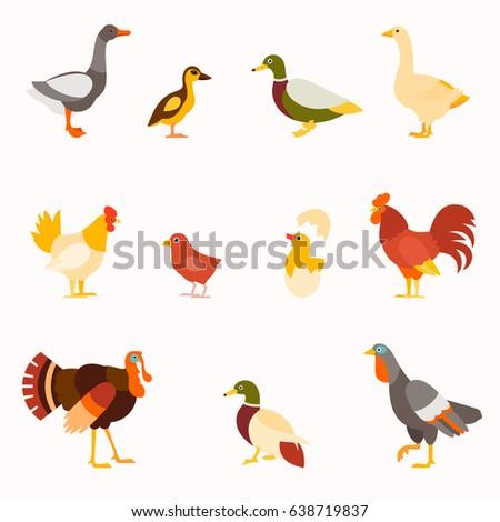 Farm birds vector set in flat style design. Poultry birds: duck, rooster, chick, goose,hen, turkey.