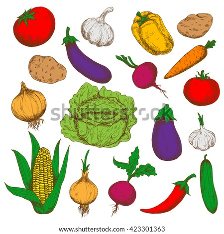 Farm cabbage and cucumber, potatoes, beetroots and eggplants, tomatoes and cayenne pepper, corn, carrot and bell pepper, garlics and onions vegetables. Healthy food and agriculture design