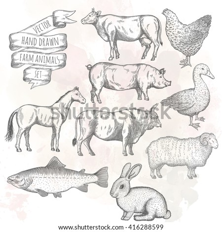 Farm collection. Bull, hen, duck, pig, horse, ram, rabbit, cow, salmon. Hand drawn isolated illustrations.