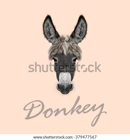 farm donkey portrait vector