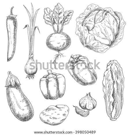 Farm fresh crunchy cabbages, bell peppers and beet, potato, pungent garlic and green onion, eggplant, hot cayenne pepper vegetables sketch drawing icons. Nice as agriculture and vegetarian food design