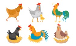 Farm Hen and Rooster with Baby Chicken Vector Illustration Set