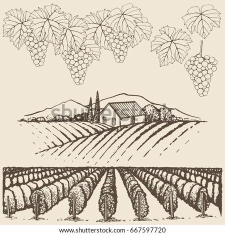 farm landscape with vineyard...