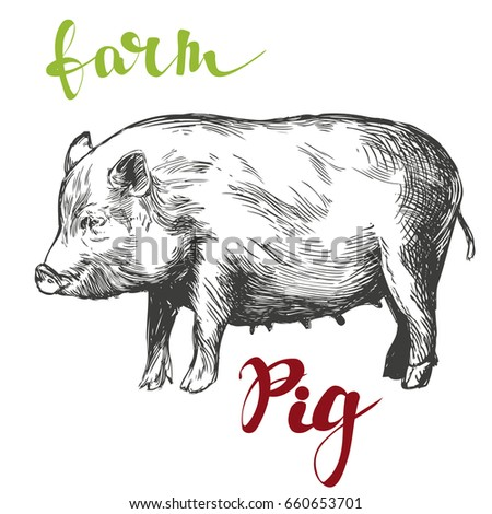 farm, pig hand drawn vector illustration realistic sketch