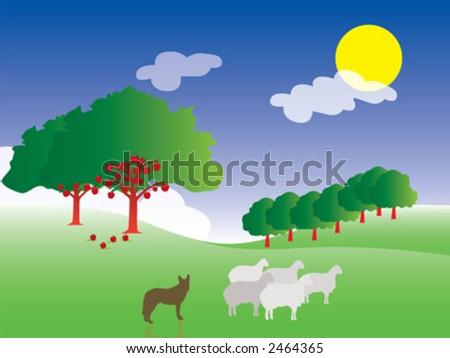 farm, sheep
