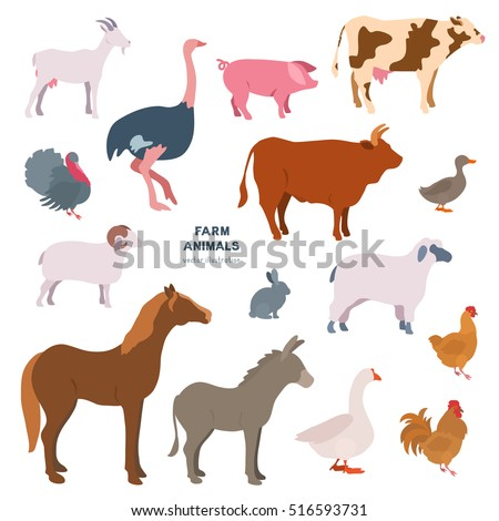 Farmer animals vector illustration set. Goat, ostrich, pig, turkey, ram, cow, bull, duck, rabbit, sheep, horse, donkey, goose, chicken, rooster. Countryside, rural cattle, poultry.