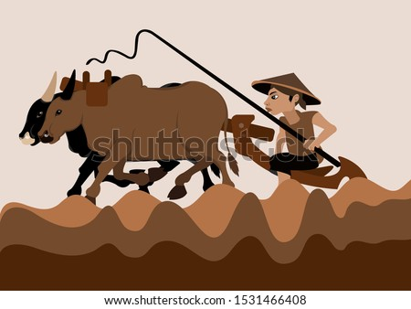farmer plowing rice fields with