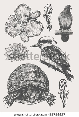 fauna and flora design element set, engraved retro style. vector