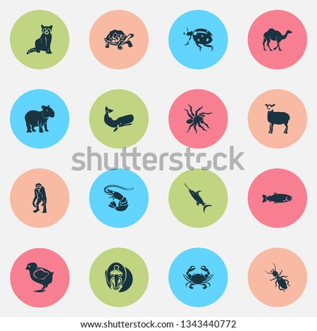 Fauna icons set with cachalote, crab, ladybird and other dromedary elements. Isolated vector illustration fauna icons.