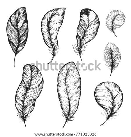 Feather hand drawn vector illustration. Sketch collection. Engraved style set.