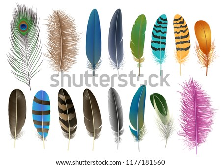 Feather icon set. Realistic set of feather vector icons for web design isolated on white background