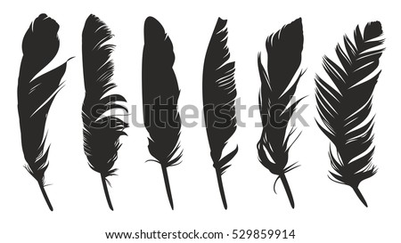 Shutterstock Feathers of birds.