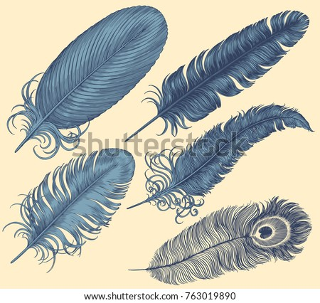 Feathers of different birds. Design set. Hand drawn engraving. Vector vintage illustration. Isolated on light background. 8 EPS