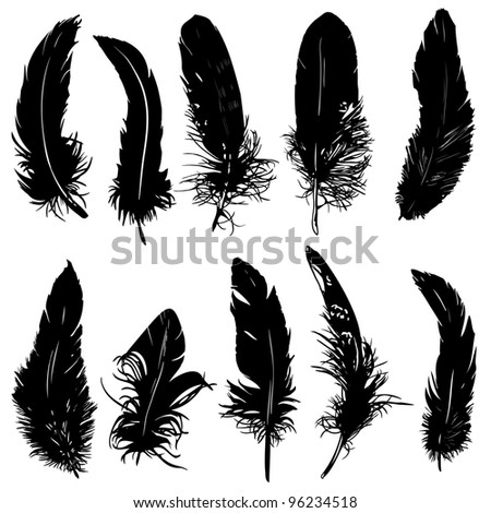 Feathers silhouette collection. Isolated.
