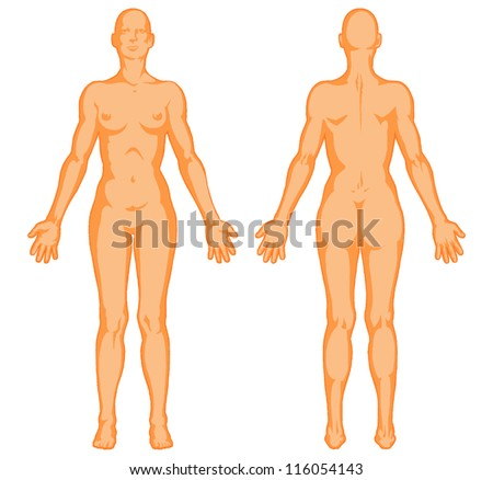 Female body shapes � human body outline � vector - posterior and anterior view - full body