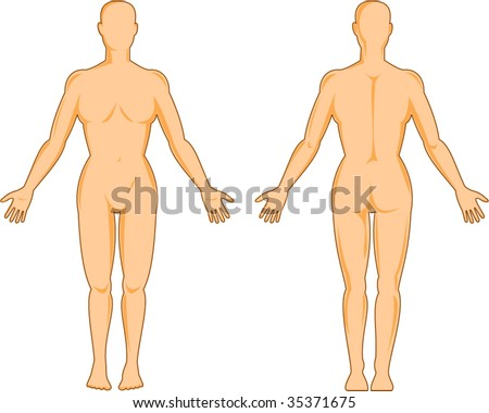 female human anatomy standing front ans back isolated on white