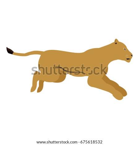 female lion african animal