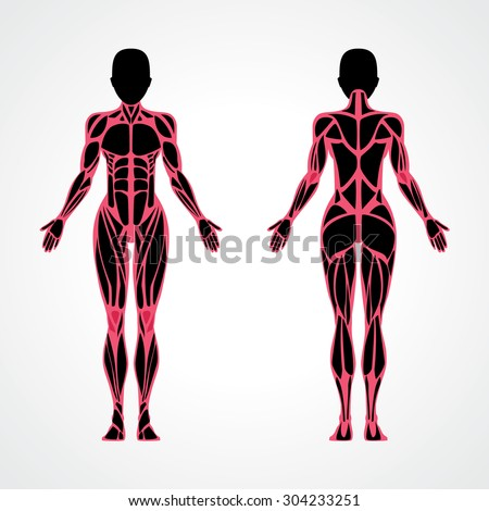 Female muscles anatomy