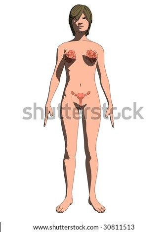 Female Sex Organs Stock Vector 30811513 : Shutterstock
