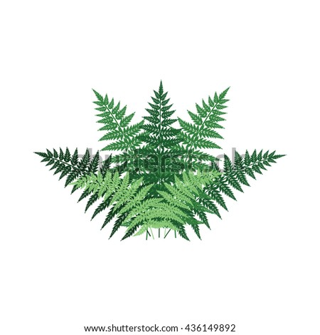 fern plant front view decorative vector element for landscape design #436149892