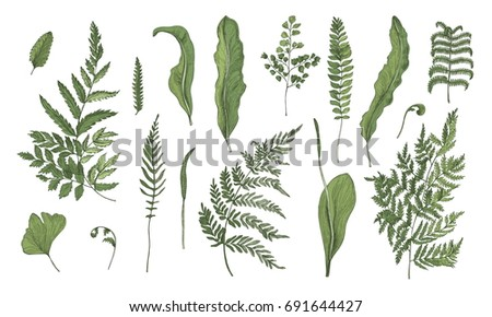 Fern realistic collection. Hand drawn sprouts, frond, leaves and stems set. Colorful vector illustration.