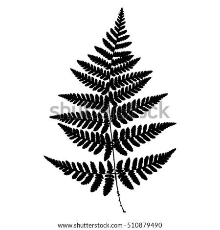 fern 14 silhouette sheet fern