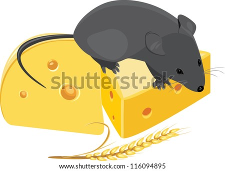 Field mouse, wheat ear and pieces of cheese. Vector - stock vector