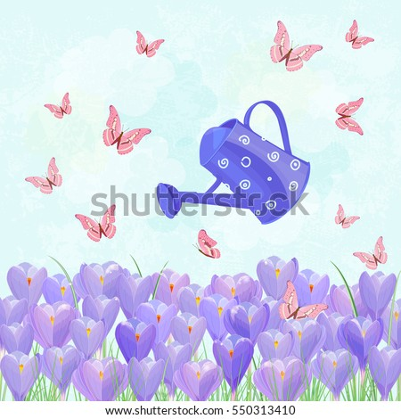 field of blooming crocus with a