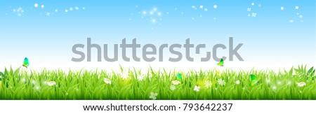 field of fresh green grass palm