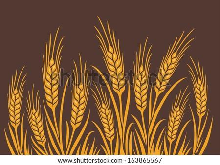 field of wheat  barley or rye