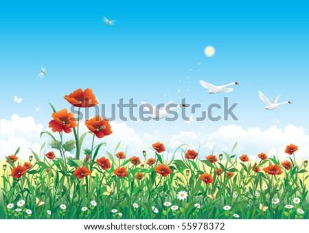 field with flowers  poppy
